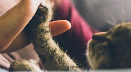 4 beneficios para la salud de compartir la vida con mascotas
