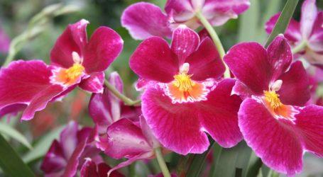 Se halla un nuevo tipo de orquídea mexicana en Hidalgo
